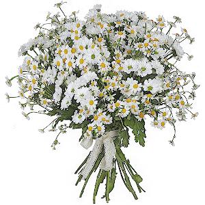 Заказ цветов через интернет ромашки доставка цветов вологда дом цветов